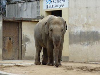 130320 zoo1-zou.jpg