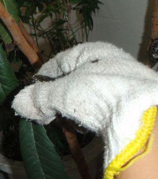 cicada catch.jpg