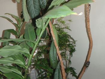 cicada5.jpg